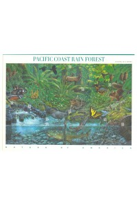 02 PacificCoast  Rain Forest